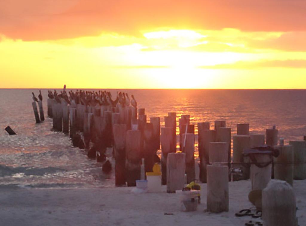 Pelicans on the Beach   CSE Properties, Naples, FL
