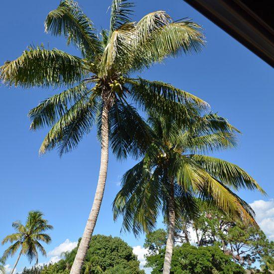 CSE Properties - Vanderbilt Vacation Villa Palm Trees